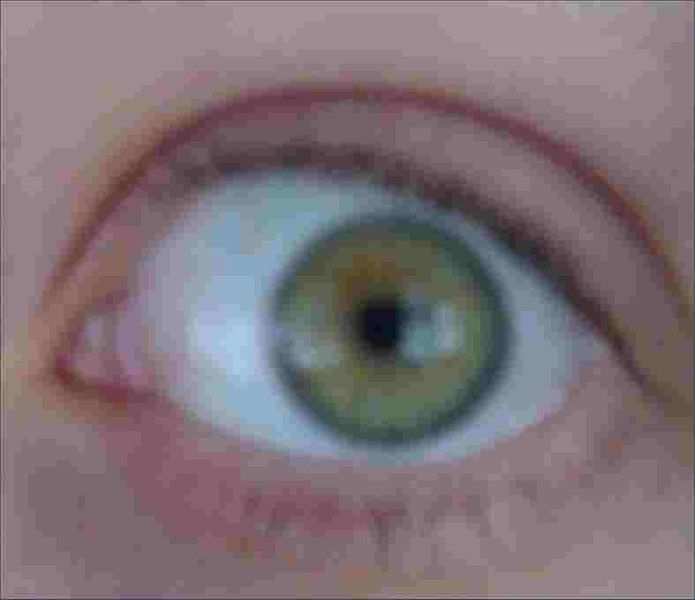File:Grethina eye.jpg